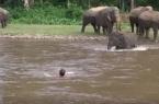 Слонёнок бросился спасать